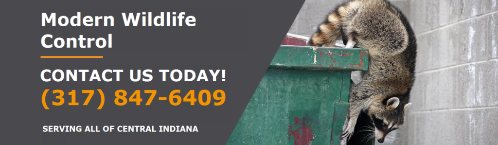 Indiana Wildlife Removal and Control Company