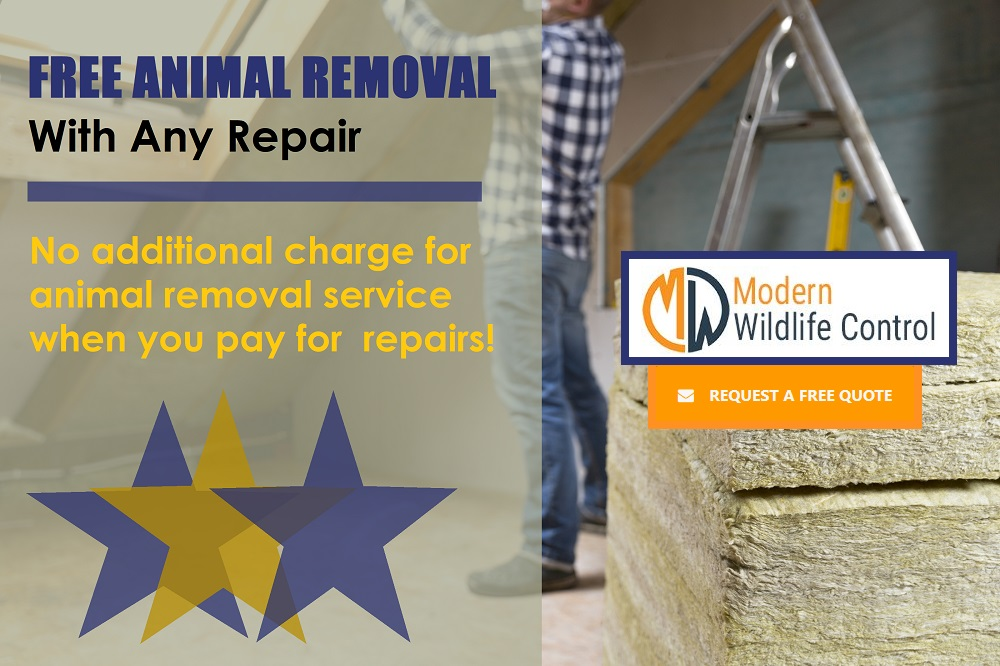 Affordable Solutions To Spring Nuisance Wildlife Problems Modern Wildlife Control