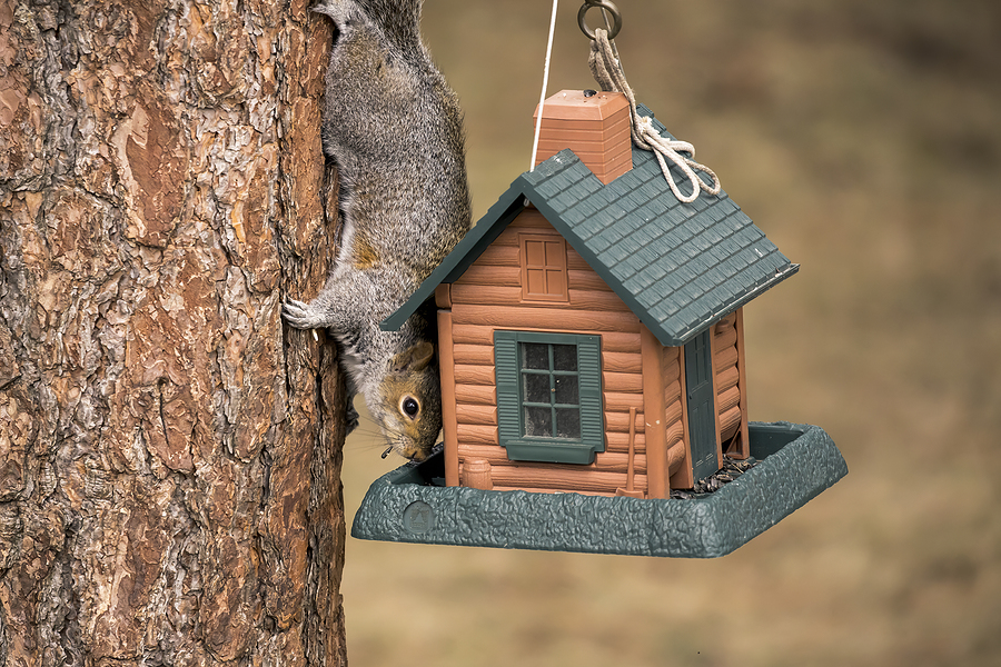 Indianapolis Squirrel Removal and Control