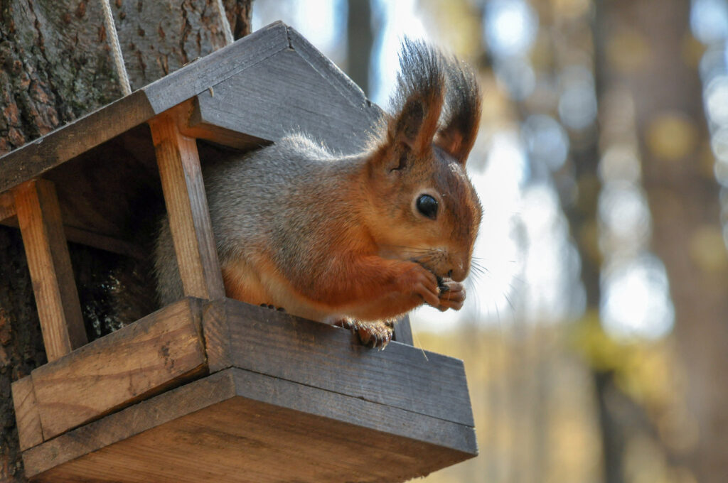 Squirrel Removal and Control Tennessee