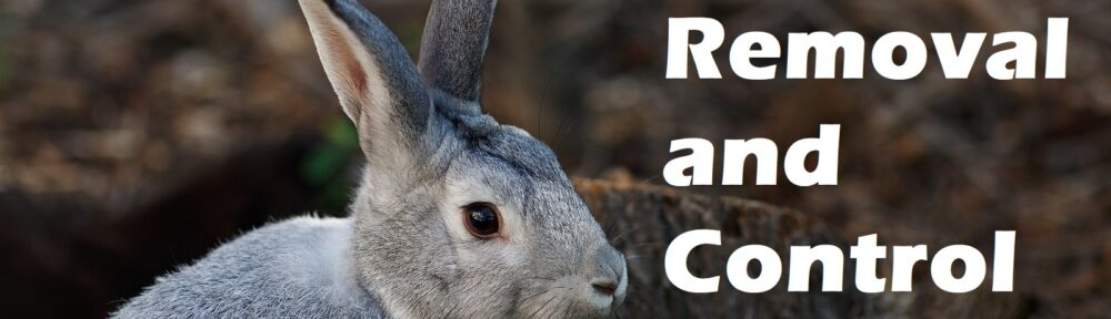 Indianapolis Rabbit Removal Service 317-847-6409