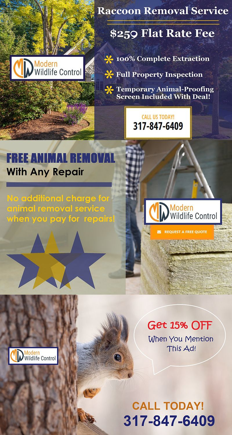 Raccoon Removal Coupon Indianapolis Indiana